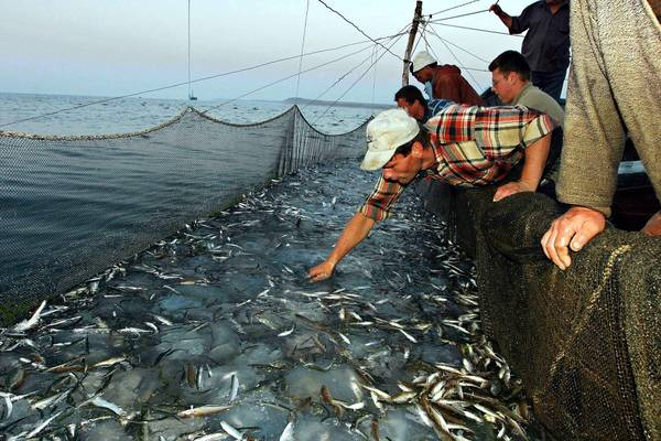 Pesca nel Mar Mediterraneo