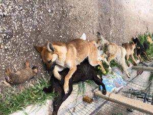 Sicilia strage cani