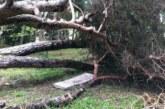 Isola Bella: il caso alberi pericolanti e dramma sfiorato finisce sul tavolo del Procuratore